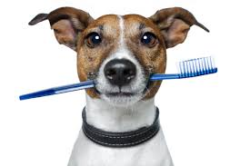 dog-toothbrush